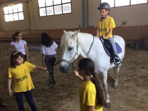 2015 Cavallo 10